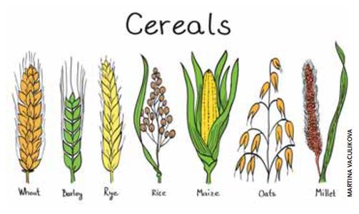 Zorgen over onze gezondheid, granen en ons dagelijks brood (deel 1)