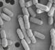 Attachment lactobacillus december 2014 80x72