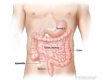 'Pleidooi voor gebruik term probiotica' *