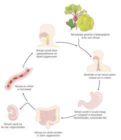 Adviezen nitraat en nitraatrijke groente herzien *