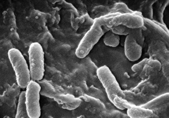 Proefdieronderzoek: Een tekort aan vitamine B12 verhoogt het risico op infectie