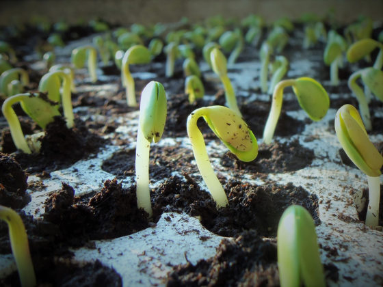 Plantaardige voeding zorgt voor miljarden aan kostenbesparing in gezondheidszorg