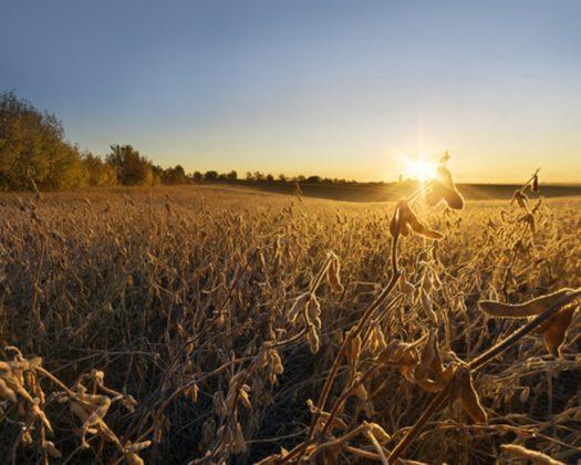 Agrifirm #1: Het gebeurt uiteindelijk op het boerenerf