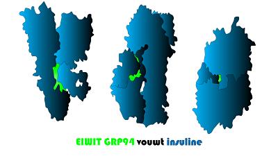 Onderzoek: Fundamenteel eiwit ontdekt bij de productie van insuline
