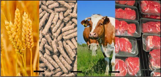 Vion #2 Wie is de baas in de vleesketen?