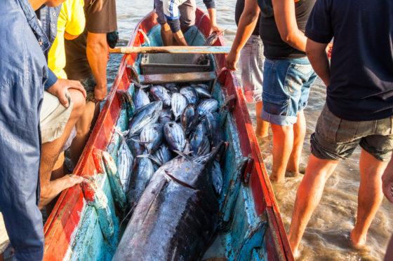 Gevaar radioactieve stoffen in zeedieren uit de Stille Oceaan 'onbeduidend'