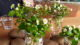 Attachment aardappelen en bloemetjes 80x45