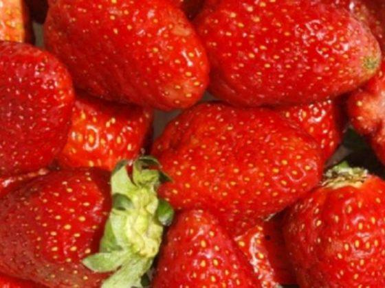 Zijde houdt fruit langer vers