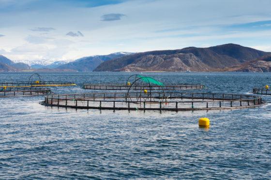 Visvangst moet verdubbelen om aan stijgende visconsumptie wereldbevolking te voldoen