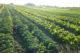 Attachment biologische landbouw 80x53