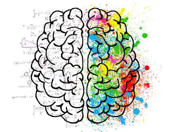 Beloningen in brein rond voedsel houden verband met overeten