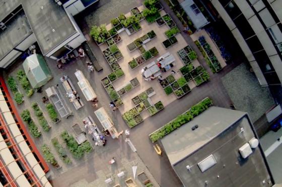 Grootste dakmoestuin van Nederland