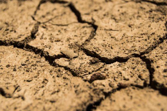FAO: Voedselzekerheid nog verder onder druk