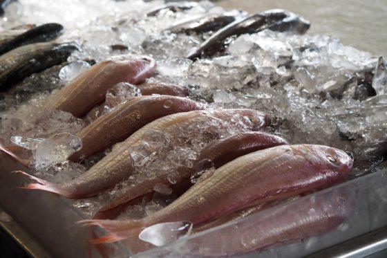 Ruime keuze duurzame vis voor consument