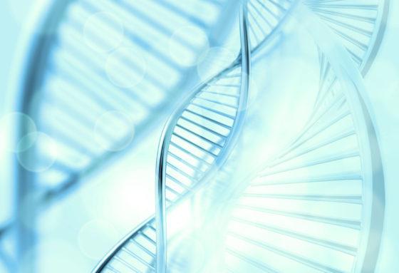 ERRy gen verantwoordelijk voor functie bruin vet