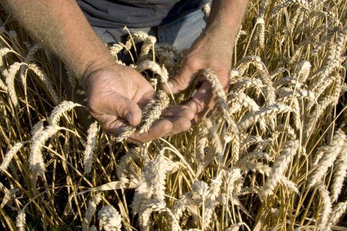 Consumentenonderzoek naar graanconsumptie gestart