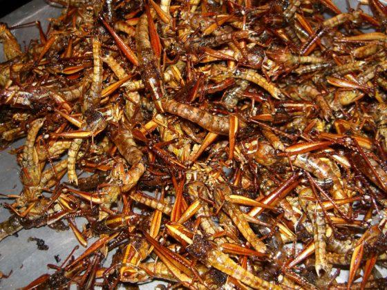 'Insecten duurzame bron van omega 3'