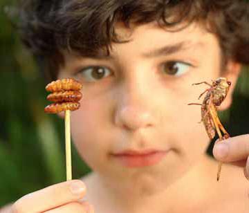 Consumptie van insecten schrikt veel mensen nog af