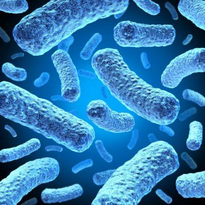 Proefdieronderzoek: microben zorgen voor gewichtsverlies