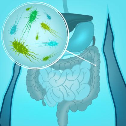 'Samenstelling microbioom kan invloed hebben op gewichtsverlies'