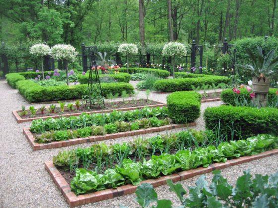 Nederlanders willen groenten en fruit uit eigen tuin