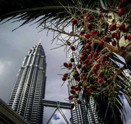Palmolie onmisbaar, maar niet voor de gezondheid