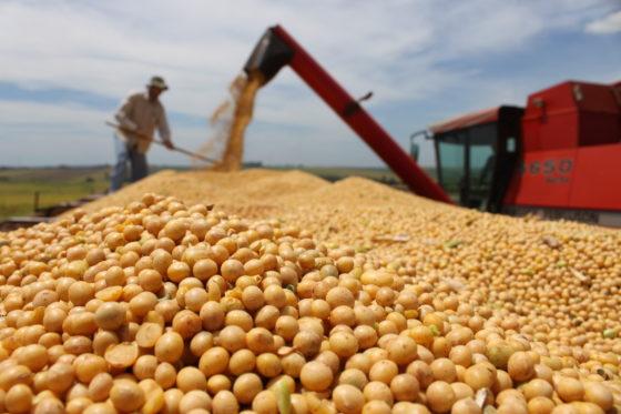 Sojaproductie in Nederland komt op gang