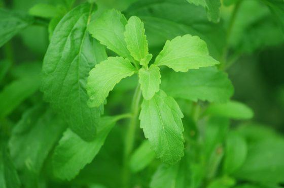 Productnieuws: 'Verantwoord snoepen met Greensweet-stevia'