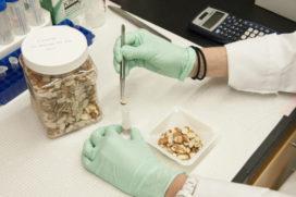 EFSA: 'Voedselveiligheid beïnvloedt consumptiegedrag consumenten'