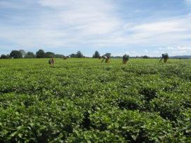 Unilever maakt namen 1300 theeleveranciers bekend