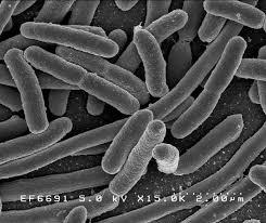 Hoe de dingen werken: Listeria bacterie